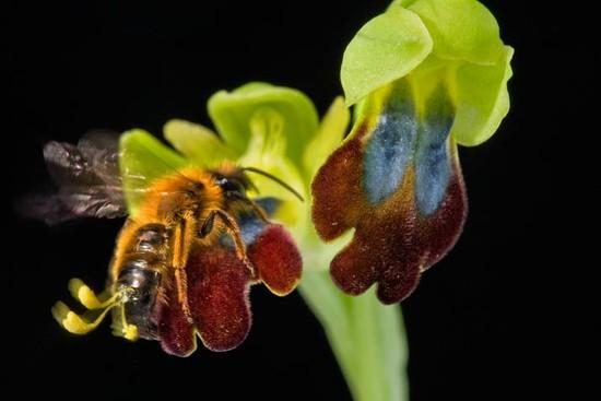 02 pollen bee 714 ad76a7e567