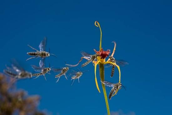 06 spider orchids 714 b5972bc50e
