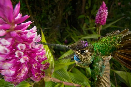 15 hummingbird 714 63da97b373