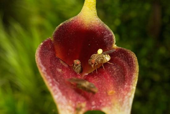 18 pollen sack 714 72ec20979f